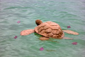 Adult_Turtle_in_Water_with_Petals